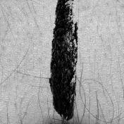 cipres 2019, infografía 29,7x42cm